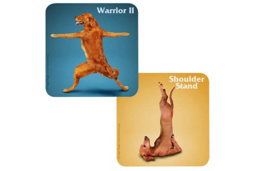 dog yoga coasters